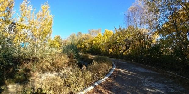 Edremit'te kış öncesi renk cümbüşü