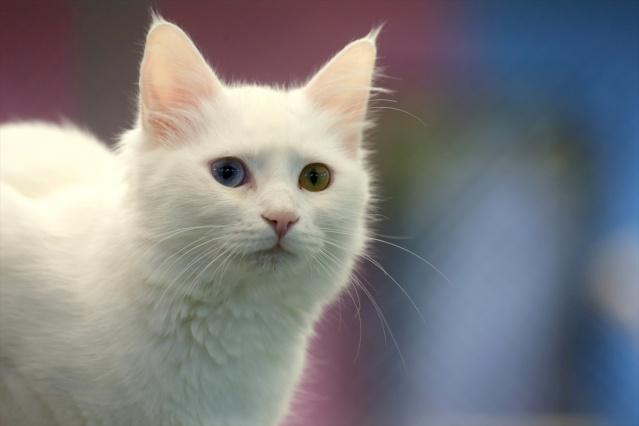 Van kedilerine 20 yılını verdi