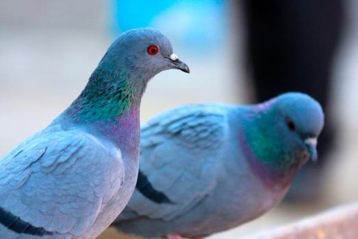 Van'da kuşların görsel şöleni