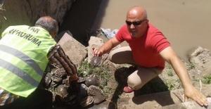 Kaplumbağalar doğal hayatlarına kavuştu