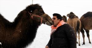Suriye'den Van'a deve getirildi!