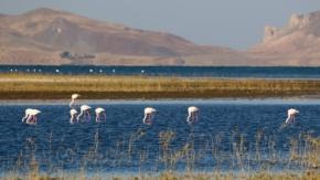 Van'da Doğu'nun Kanatları Erçek Gölü 8. Flamingo Festivali
