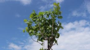 Ağaç Dikme Rekoru kırıldı