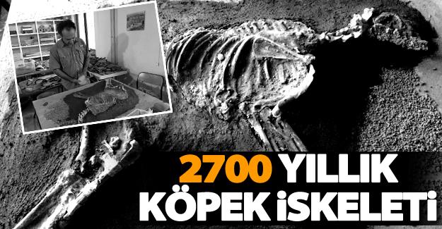 2700 yıllık köpek iskeleti sergilenecek
