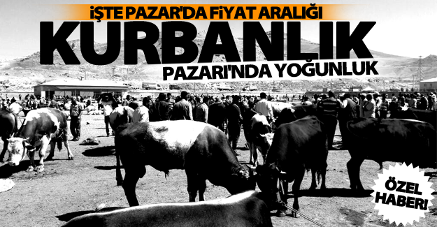 ÖZEL HABER! Hayvan pazarında bayram yoğunluğu