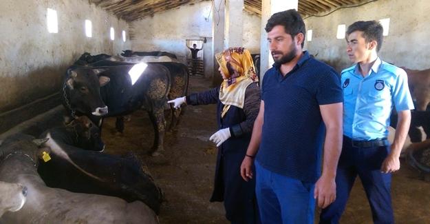 Tuşba Belediyesi zabıta ekiplerinden Kurban kesim yerleri ve kurbanlık denetimi