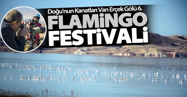 Van'da flamingo festivali