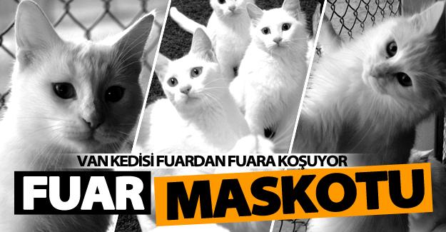Van kedisi fuarların maskotu oldu