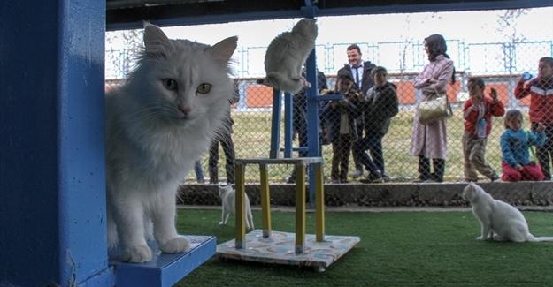 Öğrenciler Van kedisini sevdi