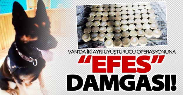 Van'da iki ayrı uyuşturucu operasyonuna Efes köpeği damgası
