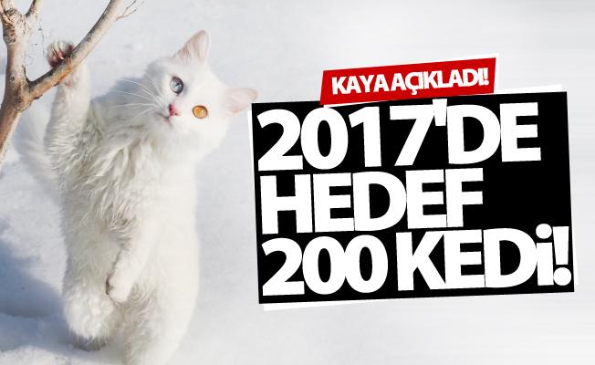 Van Kedileri'nde 2017'de 200 yavru elde edilmesi planlanıyor!