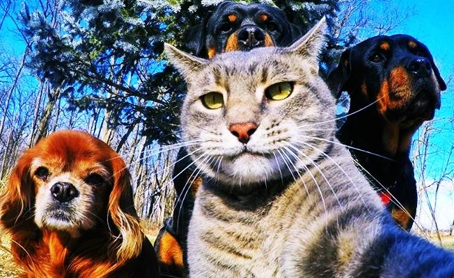Bilim dünyası açıkladı: Kedilerin kökeni bakın neresi inanamayacaksınız?