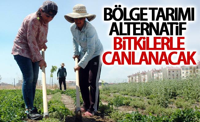 Bölge tarımı alternatif bitkilerle canlanacak