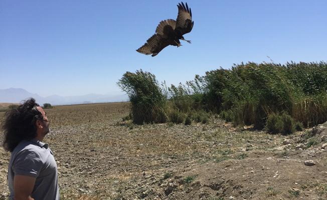 Tedavileri tamamlanan yırtıcı kuşlar özgürlüğe kanat çırptı