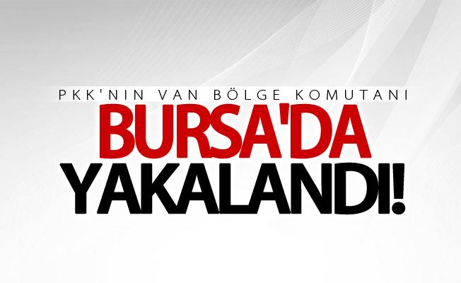 PKK'nın Van bölge komutanı Bursa'da yakalandı