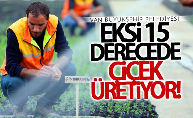 Van Büyükşehir Belediyesi eksi 15 derecede çiçek üretiyor