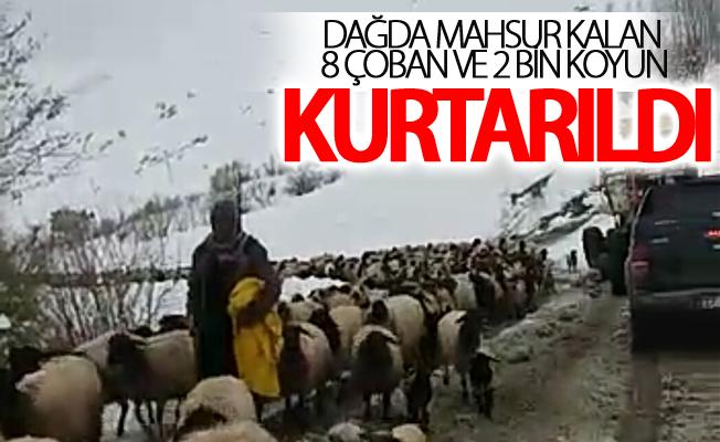 Dağda mahsur kalan 8 çoban ve 2 bin koyun kurtarıldı