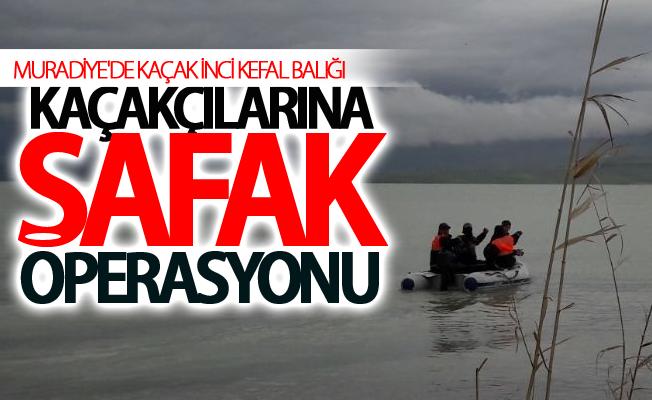 Muradiye'de kaçak inci kefal balığı kaçakçılarına şafak operasyonu