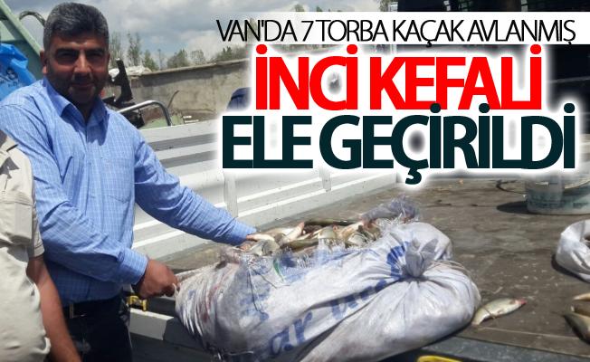 Van'da 7 torba kaçak avlanmış inci kefali ele geçirildi