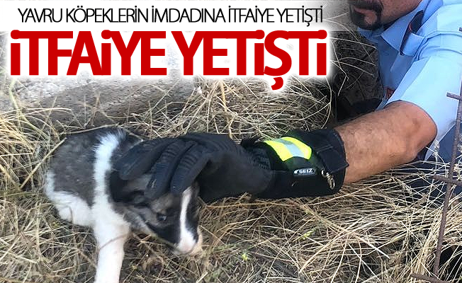 Kuyuda mahsur kalan yavru köpekler itfaiye tarafından kurtarıldı