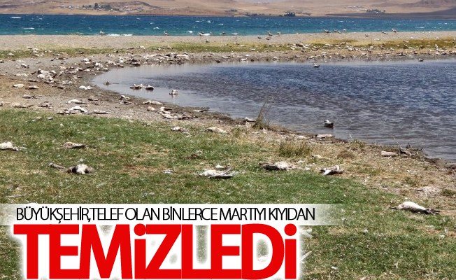 Martı ölümleri Büyükşehir'i harekete geçirdi