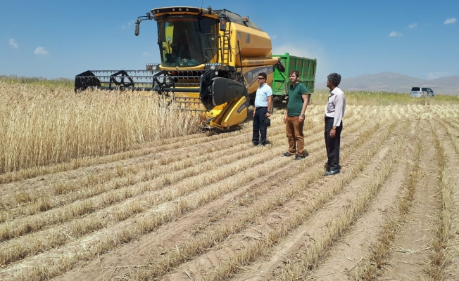 Özalp'ta buğday hasadına başlandı