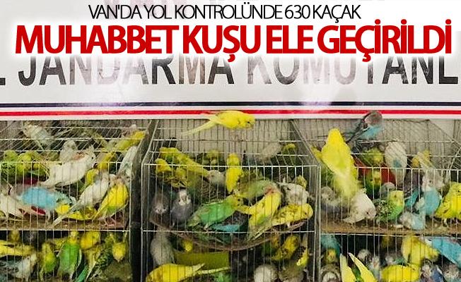 Van'da yol kontrolünde 630 kaçak muhabbet kuşu ele geçirildi