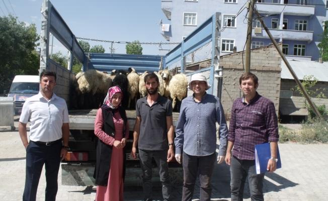 Özalp ilçesinde 204 küçükbaş hayvan dağıtıldı