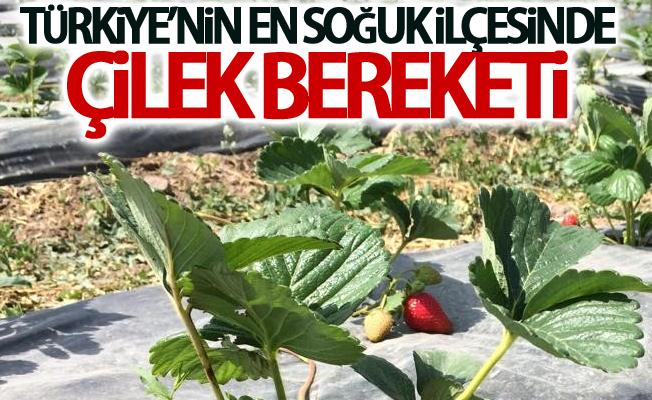 Türkiye'nin en soğuk ilçesinde çilek bereketi