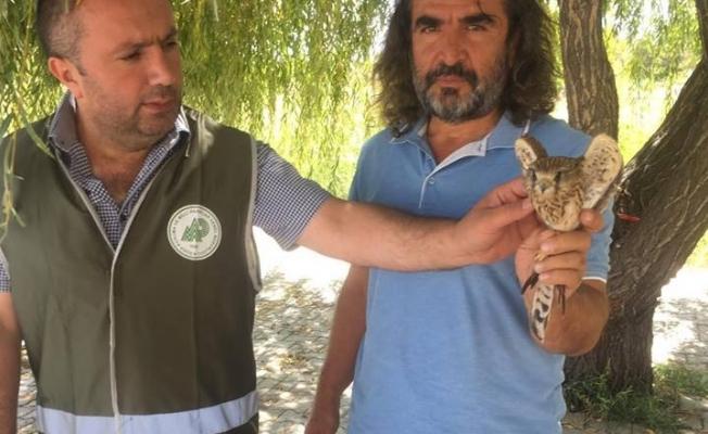 Van'da yaralı olarak bulunan Kerkenez tedavi altına alındı