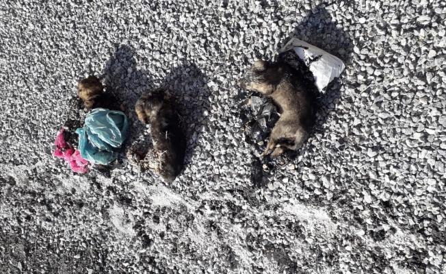Zifte yapışan yavru köpeklerin imdadına belediye yetişti