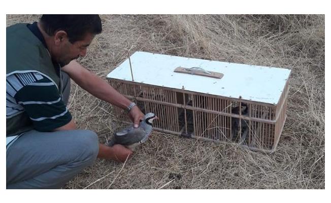 Van'da 83 keklik doğaya bırakıldı
