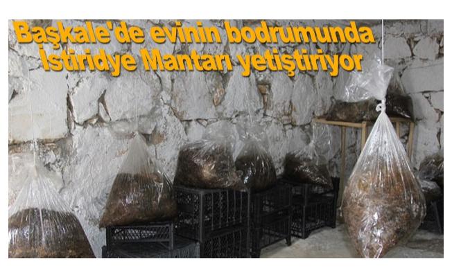 Başkale'de evinin bodrumunda İstiridye Mantarı yetiştiriyor