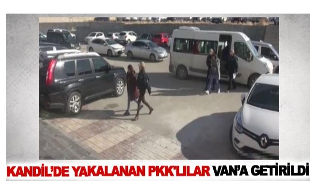 Kandil'de yakalanan Pkk'lılar Van'a getirildi