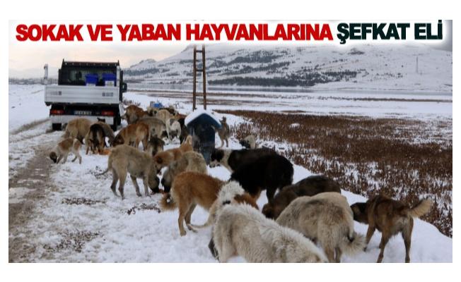 Sokak ve yaban hayvanlarına şefkat eli