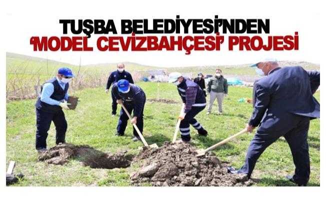 Tuşba Belediyesi'nden 'model ceviz bahçesi' projesi