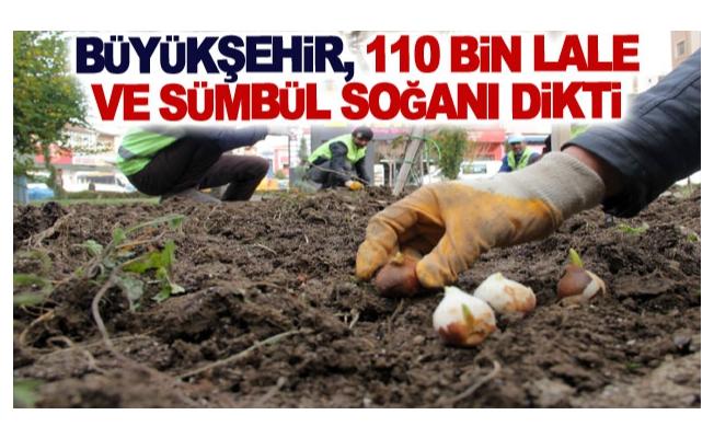 Büyükşehir, 110 bin lale ve sümbül soğanı dikti
