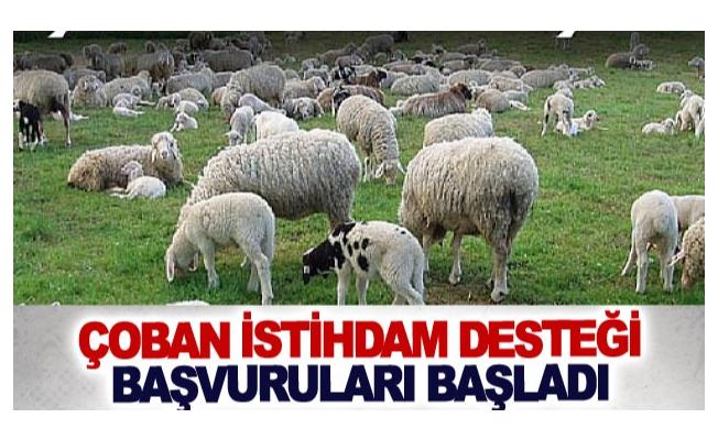 Çoban istihdam desteği başvuruları başladı
