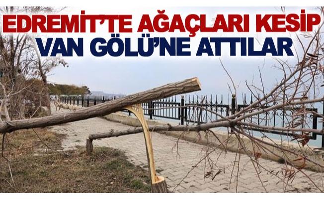 Edremit'te ağaçları kesip Van Gölü'ne attılar