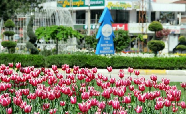 Van'da laleler park ve bahçeleri süslemeye başladı